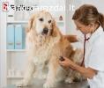 Veterinaras – smulkūs gyvūnai Olandija