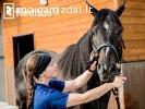 Veterinaras – stambūs gyvūnai Olandija