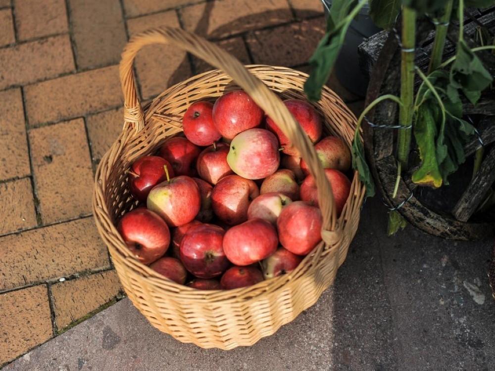 IDietistė pataria: kokias daržoves ir vaisius valgyti atėjus rudeniui?